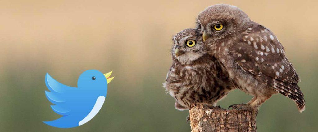 Что такое твиттер и можно ли в нем заработать - фото